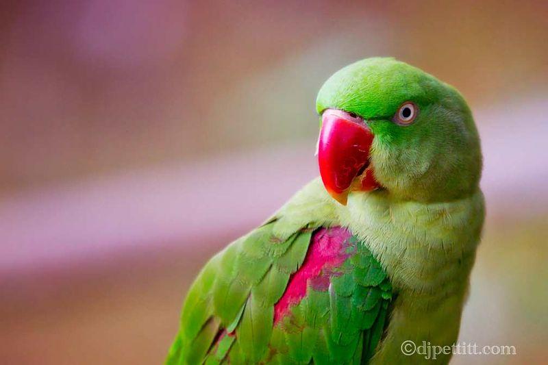 Green Parrot Photography Green Parrot